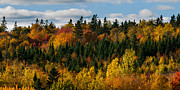 Autumn Landscape Metal Prints - PEI Autumn Trees Metal Print by Matt Dobson