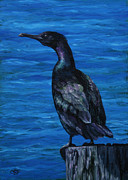 Wild Animals Paintings - Pelagic Cormorant by Crista Forest