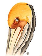 Pelican Print by Alexandra  Sanders