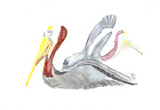 Bernadette Crotty - Pelican and mate