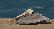 Bob Smithing - Pelican Beach