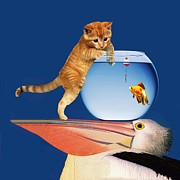 S-hooks Posters - Pelican Cat Goldfish and Worm Poster by Bruce Iorio