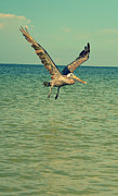 Bird At Sea Photos - Pelican Gliding by Patricia Awapara