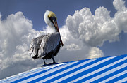 Summer Awnings Posters - Pelican in the Clouds Poster by Debra and Dave Vanderlaan
