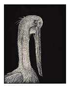 Pelican Drawings Metal Prints - Pelican Metal Print by Jeffrey Woodley