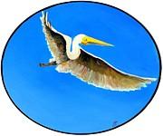 Jim Harris - Pelican