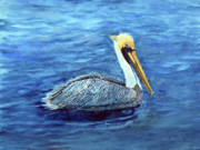Pelican Drawings Framed Prints - Pelican Framed Print by Loretta Luglio