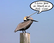 Animals Love Posters - Pelican Love You Card Poster by Al Powell Photography USA