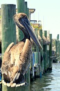 Pelican On A Post Print by Dorothy Menera