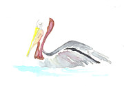 Bernadette Crotty - Pelican out for a Swim