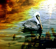 Michael Touchet - Pelican Paddle