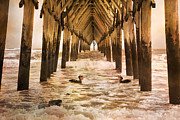 Piling Framed Prints - Pelican Paradise Framed Print by Betsy A Cutler East Coast Barrier Islands