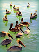 Waterfowl Framed Prints - Pelican Party Framed Print by Karen Wiles