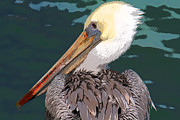Bob and Jan Shriner - Pelican Portrait