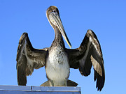 Bob and Jan Shriner - Pelican Pose