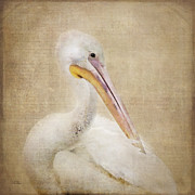 Betty LaRue - Pelican Primping