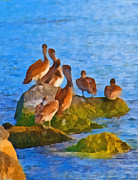 Flock Of Bird Paintings - Pelican Rock by Anne Kitzman