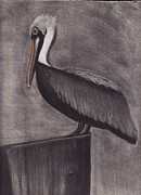 Pelican Drawings Metal Prints - Pelican Roost Metal Print by Tina Boyer