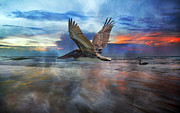 Brilliant Colours Posters - Pelican Sunrise Poster by Betsy A Cutler East Coast Barrier Islands