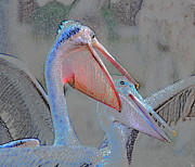 Talking Digital Art Posters - Pelican talk Poster by David Lee Thompson