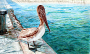 Pelican Drawings Metal Prints - Pelican - Wheres Lunch? Metal Print by Linda Ginn