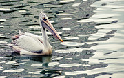 Jenny Rainbow - Pelican with Abstract Water Reflections I