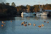 Shrimp Boat Prints - Pelicans and Shrimp Boats Print by Michael Thomas