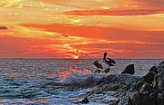 Up And Coming Prints - Pelicans at Cabo Sunrise Print by Marcia Colelli