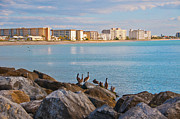 Jetty View Park Prints - Pelicans View of Venice Beach in Florida Print by Anne Kitzman