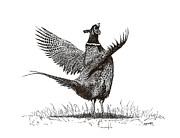 Pheasant Drawings Prints - Pen and Ink Drawing of Pheasant in Black and White Print by Mario  Perez