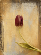 Tulips Metal Prints - Penchant Naturel 03bt03c Metal Print by Variance Collections