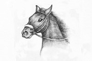 Grey Drawings Framed Prints - Pencil Drawing of a horse Framed Print by Kiril Stanchev