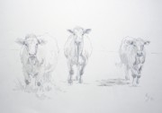 Cows Drawings Posters - Pencil drawing of three cows Poster by Mike Jory