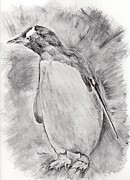 Penguin Drawings - Penguin 1 by Bari Titen