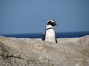 Jennifer Longsworth - Penguin on the Lookout