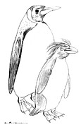 Penguin Drawings Metal Prints - Penguins Metal Print by Kurt Tessmann