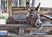 Donkey Digital Art Metal Prints - Penny Ann Metal Print by Victor Montgomery