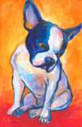 Terrier Dog Drawings Framed Prints - Pensive Boston Terrier Dog  Framed Print by Svetlana Novikova