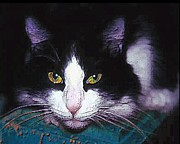 Alice Ramirez Framed Prints - Pensive cat Framed Print by Alice Ramirez