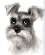 White Dog Drawings Framed Prints - Pensive Schnauzer Dog painting Framed Print by Svetlana Novikova