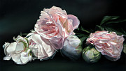 Peonies Paintings - Peonies IV by Thomas Darnell