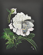 Scratchboard Paintings - Peony and Butterfly by Emily Land