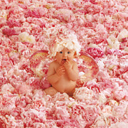 Color  Photography Photos - Peony Angel by Anne Geddes