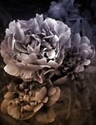 Michelle Frizzell-Thompson - Peony Enhancement