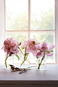 Sandra Cunningham - Peony flowers in glass jars near window