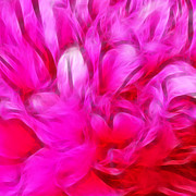 Featured Art - Peony heart by Sharon Lisa Clarke