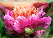 Peach Prints - Peony - Moment Of Glory Print by Carol Cavalaris