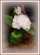Print On Acrylic Prints - Peony of Peace  Print by Bobbee Rickard