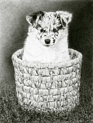 Border Drawings - Pepper by Ann Ranlett