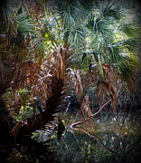 Pepper Greeting Card Prints - Pepper Creek Palm Print by Sheri McLeroy
